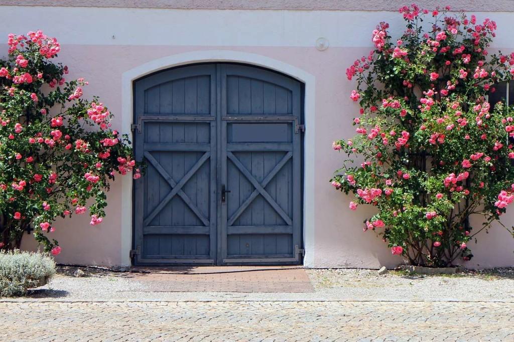 Фото-Плетистые розы