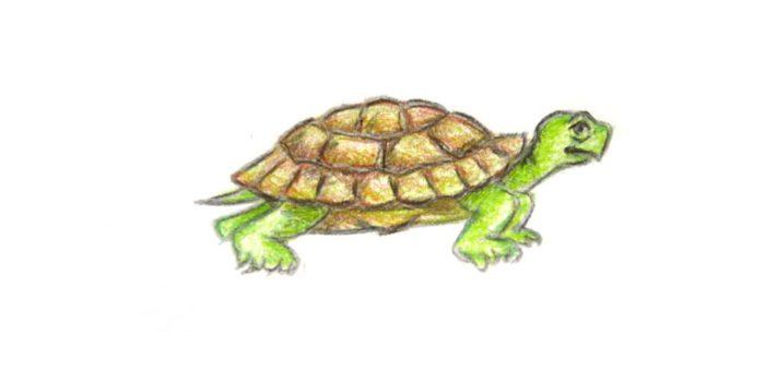 Как нарисовать черепаху поэтапно карандашом
